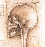 Leonardo da Vinci Drawing of Human Skull